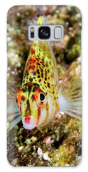 Feather Stars Galaxy Case - Close-up Of Colorful Hawkfish by Jaynes Gallery