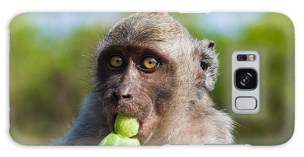 Closeup Monkey Eating Cucumber Galaxy Case