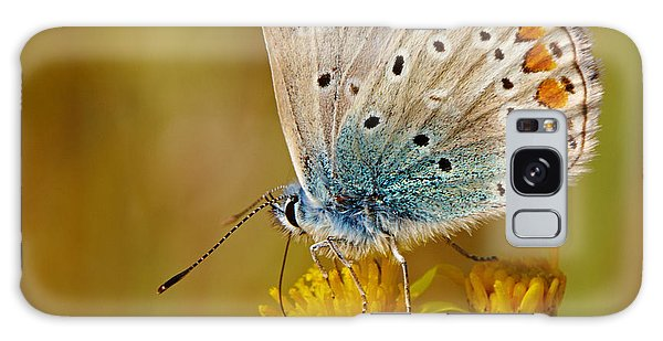 Closeup Of A Common Blue Butterfly Galaxy Case