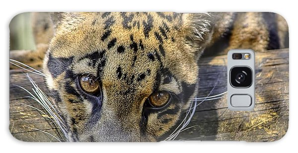 Galaxy Case featuring the photograph Clouded Leopard by Steven Sparks
