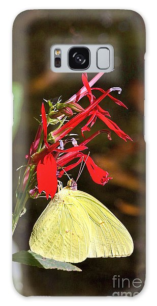Cloudless Sulphur On Cardinal Flower Galaxy Case
