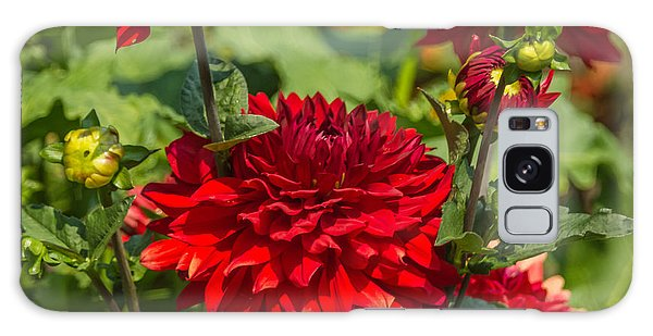 Cluster Of Dahlias Galaxy Case by Jane Luxton