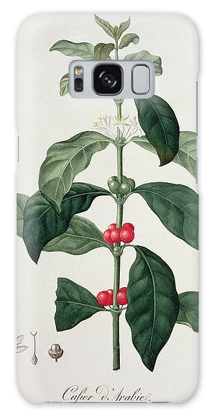 Plants Galaxy Case - Coffea Arabica From Phytographie by L.F.J. Hoquart