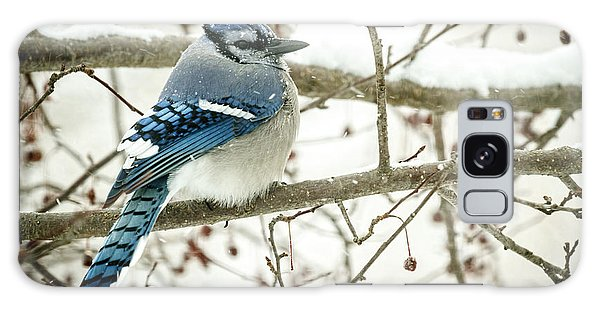 Cold Blue Jay Galaxy Case