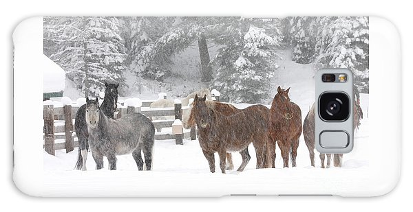 Cold Ponnies Galaxy Case