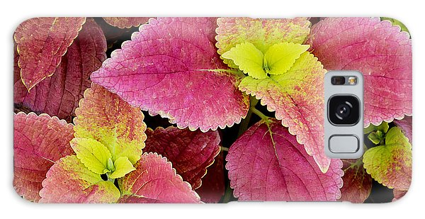 Coleus Colorfulius Galaxy Case