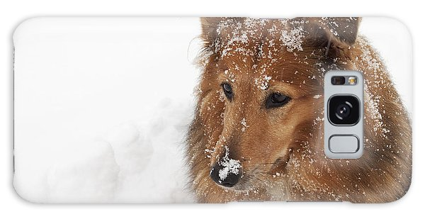 Collie In The Snow Galaxy Case by Jeannette Hunt