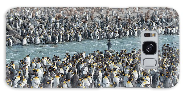 Cold Day Galaxy Case - Colony Of King Penguins, Aptenodytes by Tom Murphy