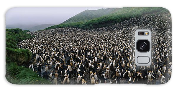 Royal Colony Galaxy Case - Colony Of Royal Penguin Eudyptes by Animal Images