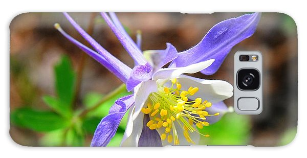 Colorado Blue Columbine Flower Galaxy Case