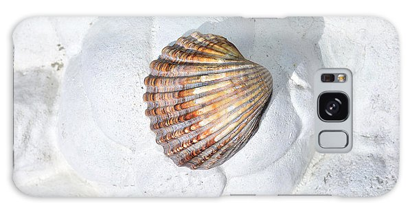 Colored Seashell  Galaxy Case