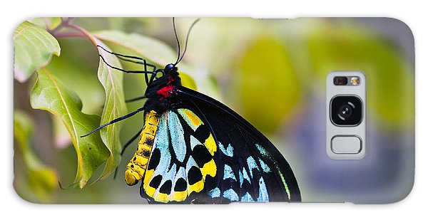 colorful butterfly Ornithoptera priamus Galaxy Case