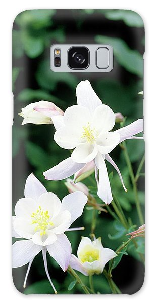 Aquilegia Galaxy Case - Columbine (aquilegia 'snow Queen') by Darryl Sweetland/science Photo Library