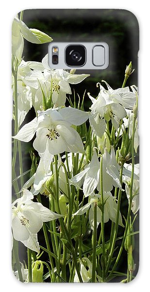 Aquilegia Galaxy Case - Columbine (aquilegia Vulgaris Var. Alba) by Neil Joy/science Photo Library