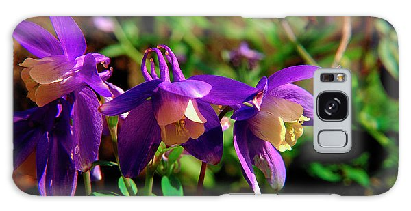Aquilegia Galaxy Case - Columbine by Mike Vardy/science Photo Library