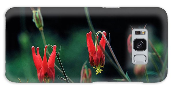 Aquilegia Galaxy Case - Columbine by Science Photo Library
