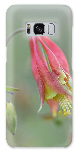 Columbine Softly  Galaxy Case by Debbie Green