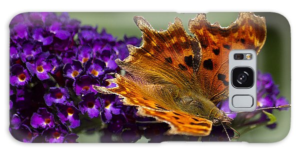 Comma Butterfly On Buddleia Galaxy Case by Shirley Mitchell