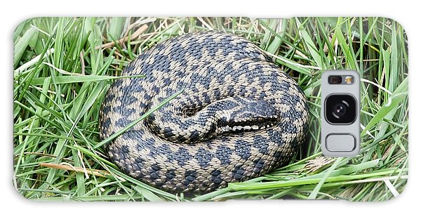 Grass Snake Galaxy Case - Common Adder by Gustoimages/science Photo Library
