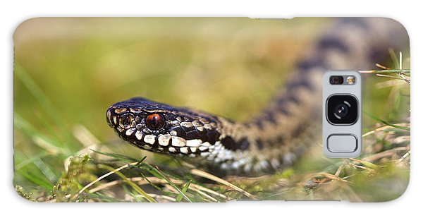 Grass Snake Galaxy Case - Common Adder by Simon Booth/science Photo Library