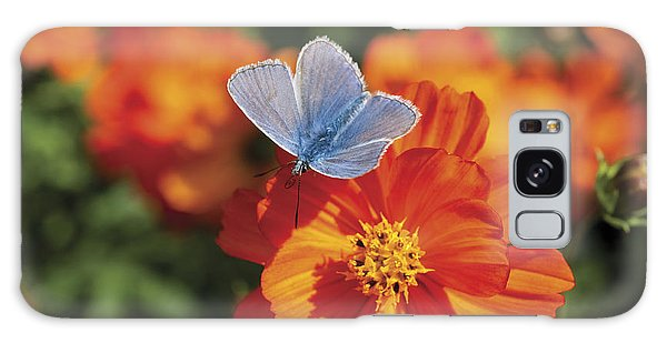Common Blue Butterfly Galaxy Case by Lana Enderle