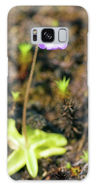Cairngorms National Park Galaxy Case - Common Butterwort (pinguicula Vulgaris) by Duncan Shaw/science Photo Library