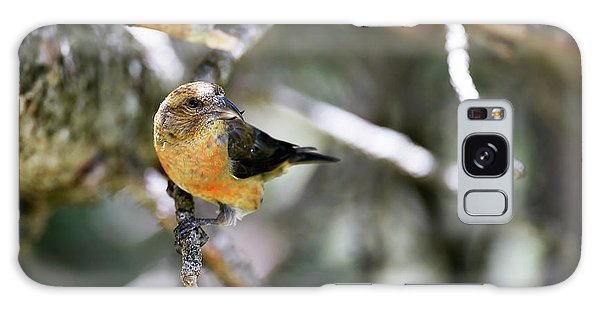Common Crossbill Female Galaxy Case
