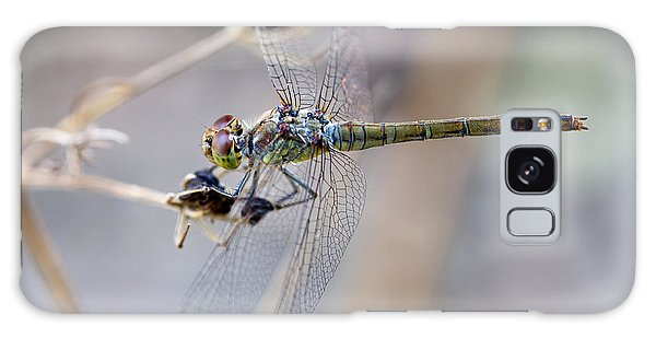 Common Darter Female On Crete Galaxy Case