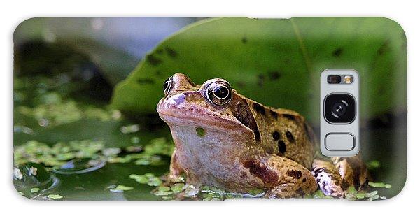 Common Frog Galaxy Case