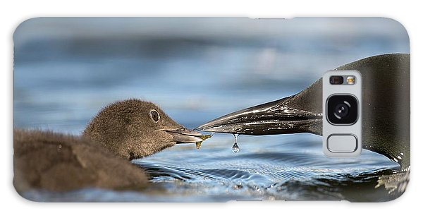 Loon Galaxy S8 Case - Common Loon Feeding Chick by Dr P. Marazzi