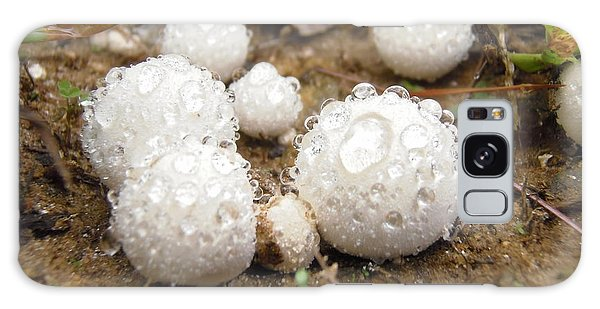 Common Puffball Dewdrop Harvest Galaxy Case