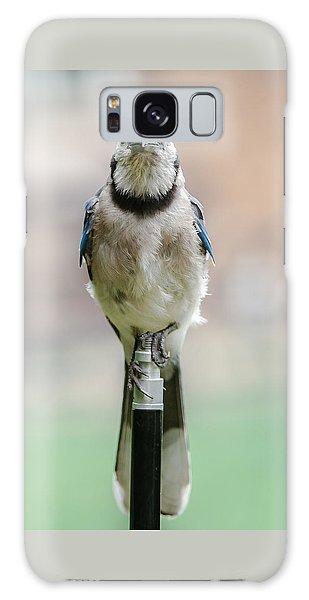 Contemplative Blue Jay Galaxy Case