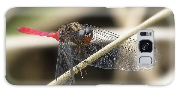 Cool Dragon Fly 0001 Galaxy Case by Kevin Chippindall