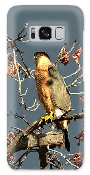 Cooper's Hawk Catches Sun In Stormy Sky Galaxy Case
