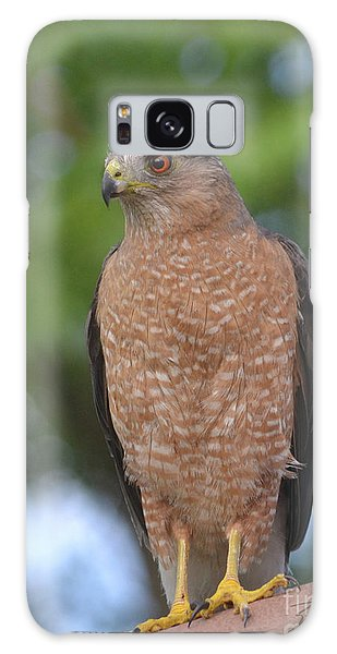 Cooper's Hawk I Galaxy Case by Suzette Kallen