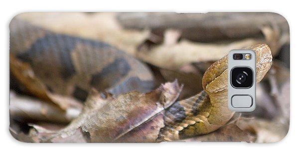 Copperhead In The Wild Galaxy Case by Betsy Knapp