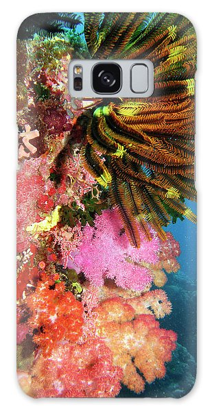 Feather Stars Galaxy Case - Coral Agincourt Reef Great Barrier Reef by David Wall