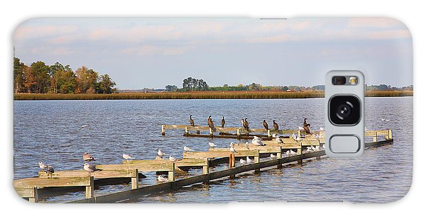 Cormorants And Seagulls On Old Dock Near Blackwater  National Wildlife Refuge Near Cambridge Md Galaxy Case by William Kuta