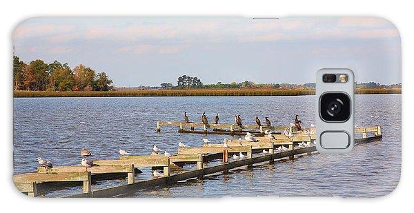 Cormorants And Seagulls On Old Dock Near Blackwater  National Wildlife Refuge Near Cambridge Md Galaxy Case