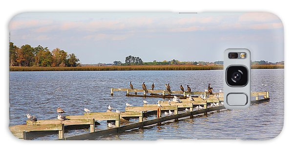 Cormorants And Seagulls On Old Dock Near Blackwater  National Wildlife Refuge Near Cambridge Md Galaxy Case
