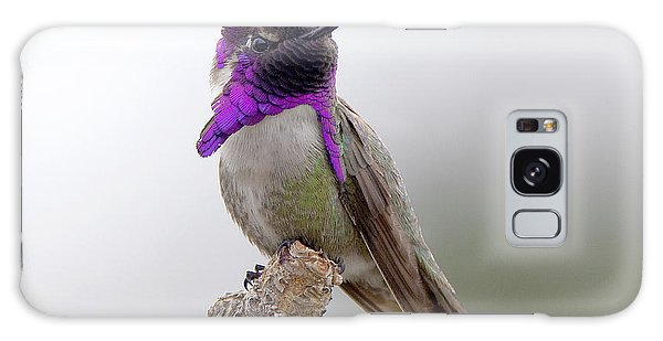 Costa's Hummingbird Galaxy Case