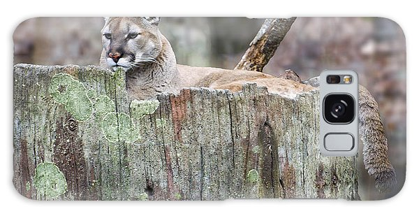 Cougar On A Stump Galaxy Case by Chris Flees