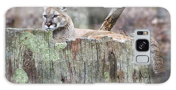 Featured Images Galaxy Case - Cougar On A Stump by Chris Flees
