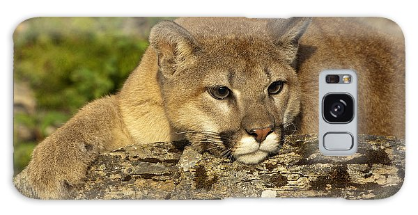 Cougar On Lichen Rock Galaxy Case by Sandra Bronstein