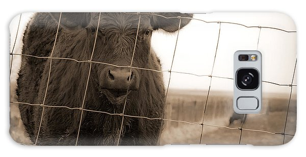 Cow At Fence In Sepia Galaxy Case