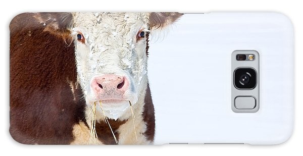 Cow - Fine Art Photography Print Galaxy Case