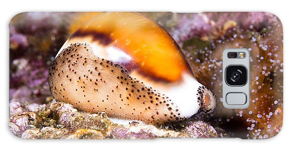 Cowry Snail Galaxy Case by Joe Belanger