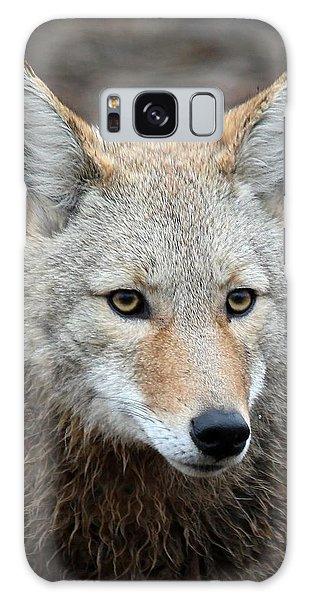 Coyote Galaxy Case by Athena Mckinzie