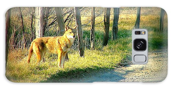 Coyote In Cades Cove Galaxy Case