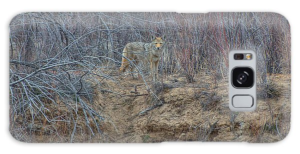Coyote In The Brush Galaxy Case by Britt Runyon